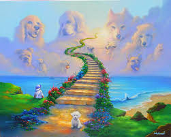 Why Having a Dog or Cat Has a Deep Spiritual Meaning 3
