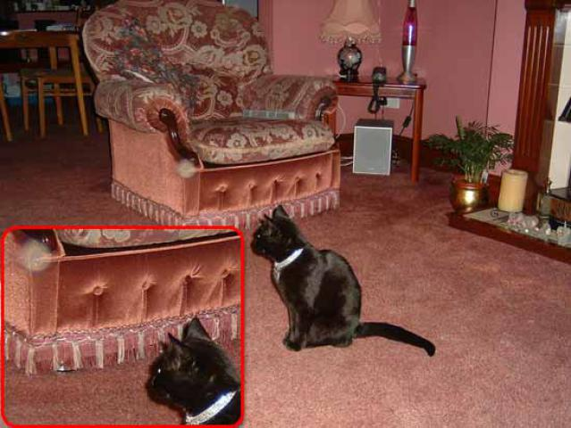 Cat watches Orb
