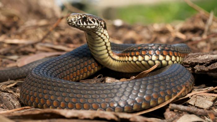 snake-common-animal-messengers-and-their-meaningsnake-common-animal-messengers-and-their-meaning