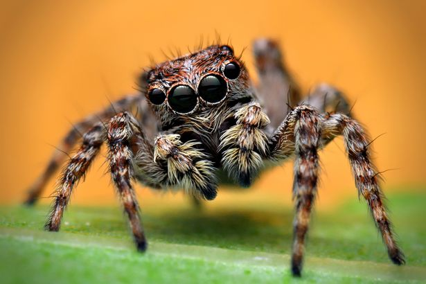 spider-common-animal-messengers-and-their-meaning