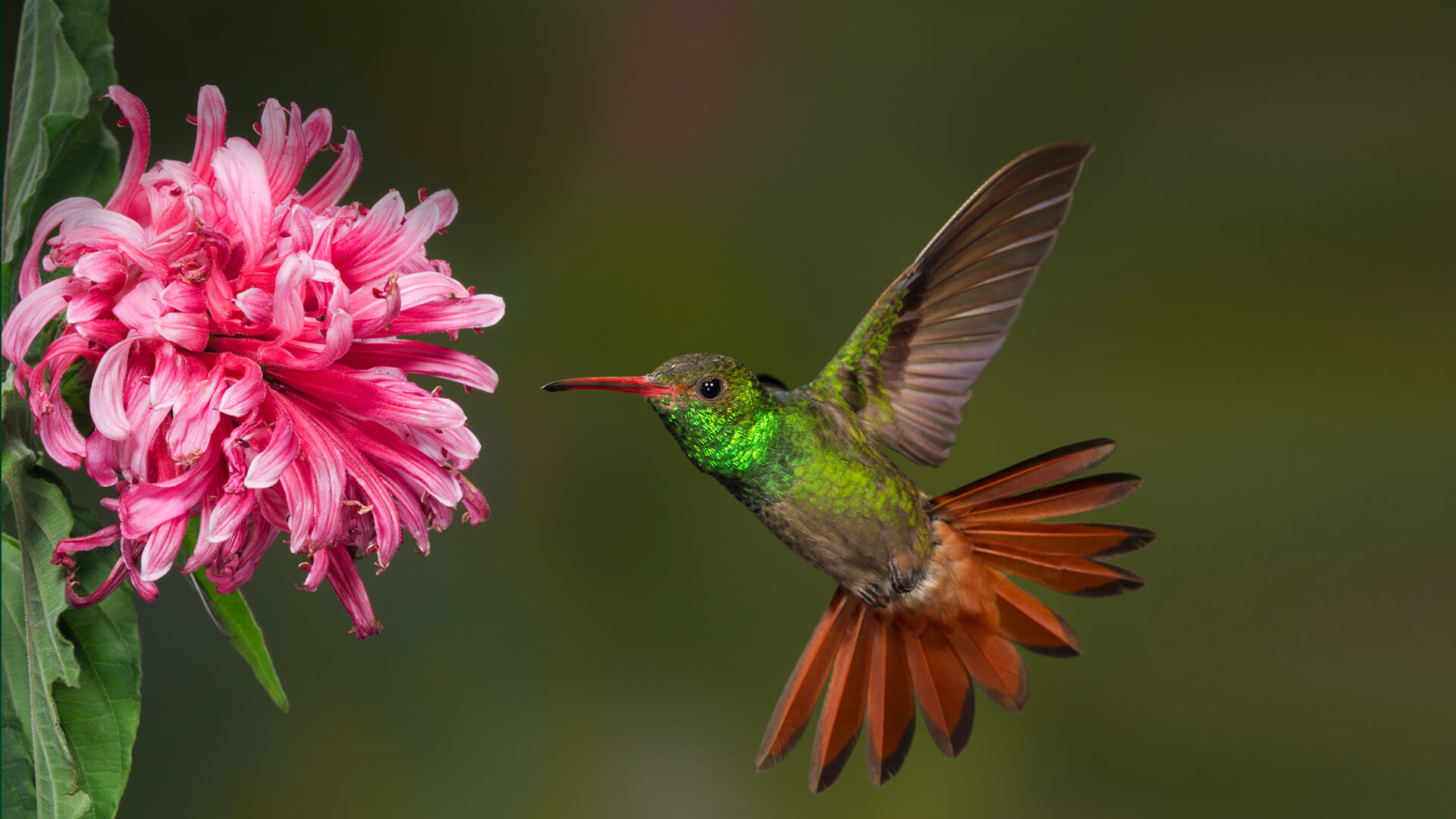 Spiritual Messengers Symbolic And Spiritual Meaning Of Hummingbirds