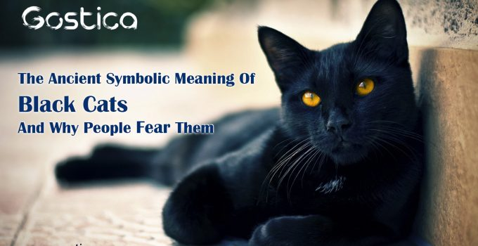 The-Ancient-Symbolic-Meaning-Of-Black-Cats-And-Why-People-Fear-Them.jpg