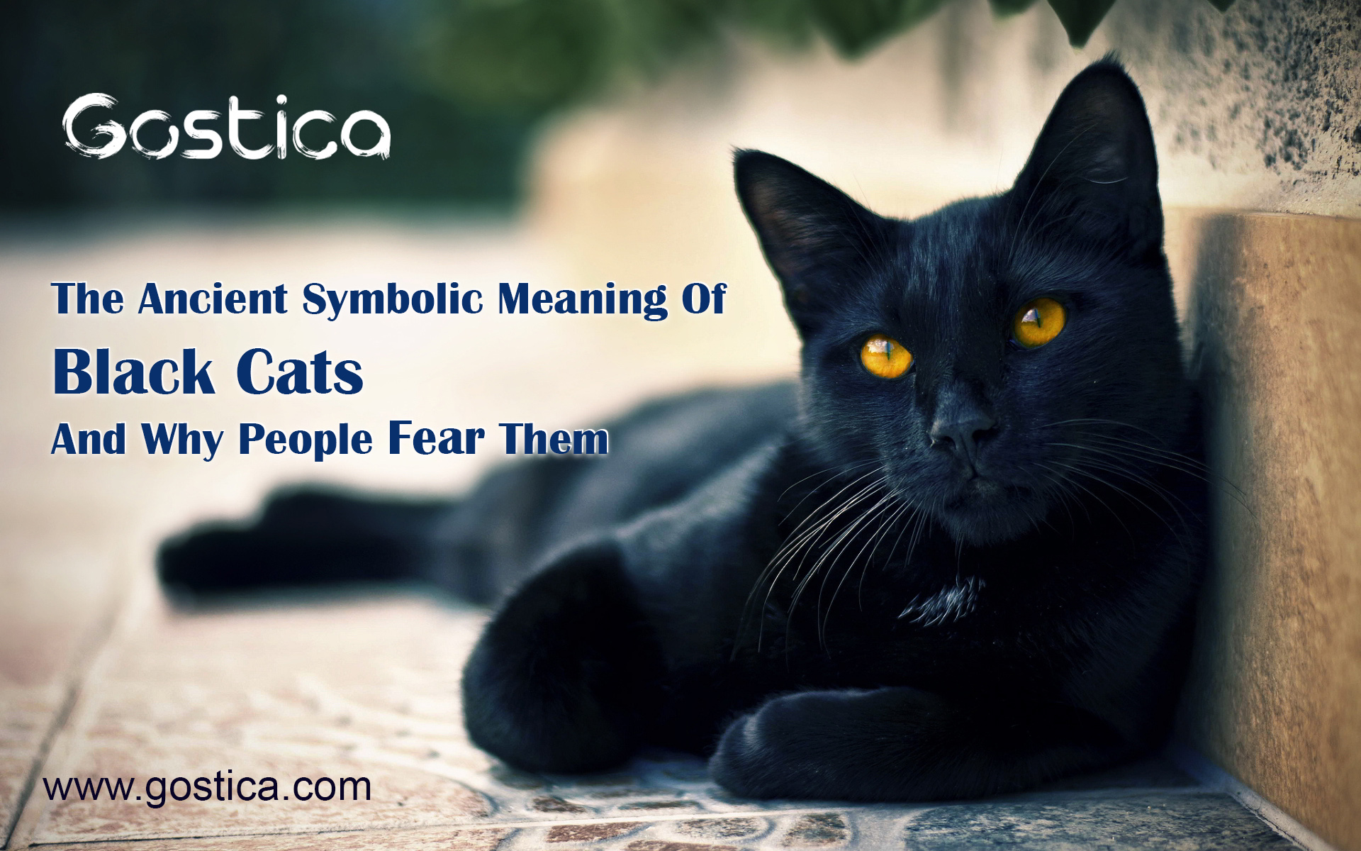 The Ancient Symbolic Meaning Of Black Cats And Why People Fear Them