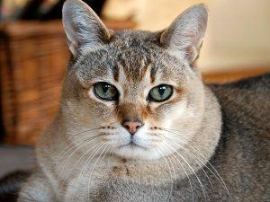 Which-Shamanic-Animals-cat.jpg