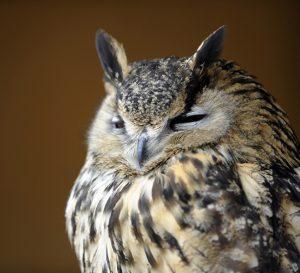 Which-Shamanic-Animals-owl.jpg