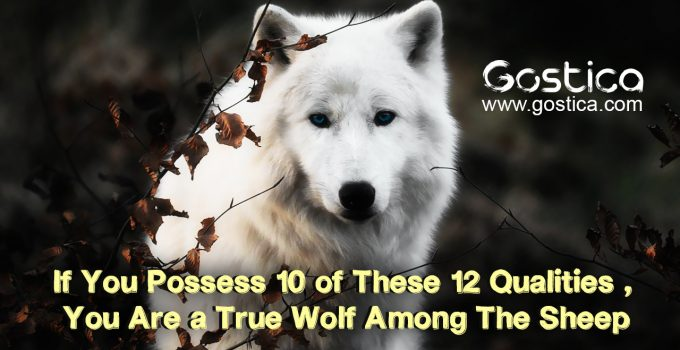 If-You-Possess-10-of-These-12-Qualities-You-Are-a-True-Wolf-.jpg