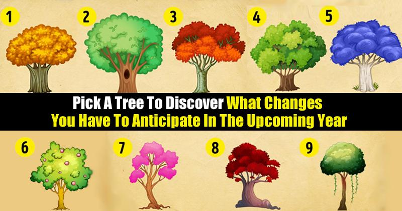 Pick-A-Tree-To-Discover-What-You-Have-To-Look-Forward-To-For-2018.jpg