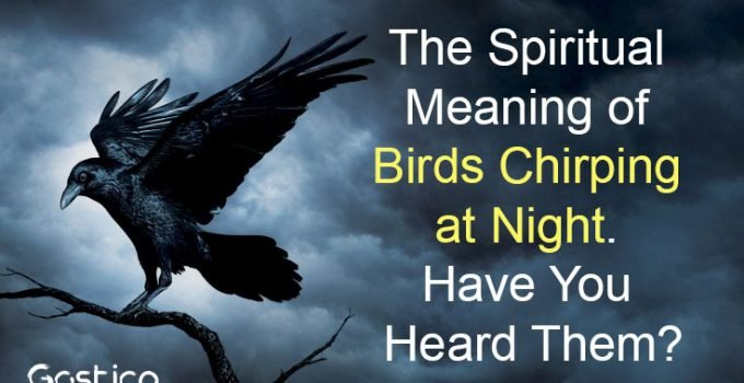 The-Spiritual-Meaning-of-Birds-Chirping-at-Night.-Have-You-Heard-Them.jpg