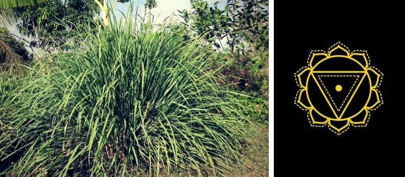 3.-Solar-Plexus-Chakra-—-Lemongrass.jpg