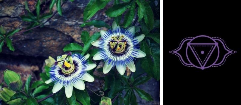 6.-Third-Eye-Chakra-—-Passionflower.jpg