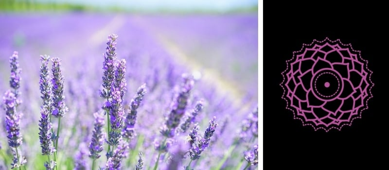 7.-Crown-Chakra-—-Lavender.jpg