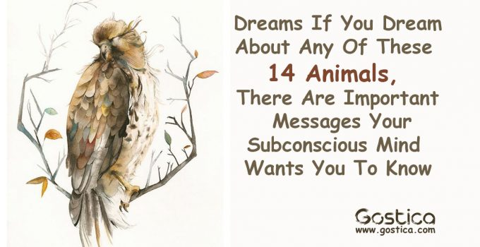 Dreams-If-You-Dream-About-Any-Of-These-14-Animals-There-Are-Important-Messages-Your-Subconscious-Mind-Wants-You-To-Know.jpg