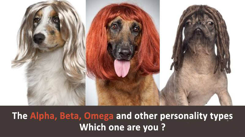 The-Alpha-Beta-Omega-and-other-Personality-Types-–-Which-one-are-you.jpg