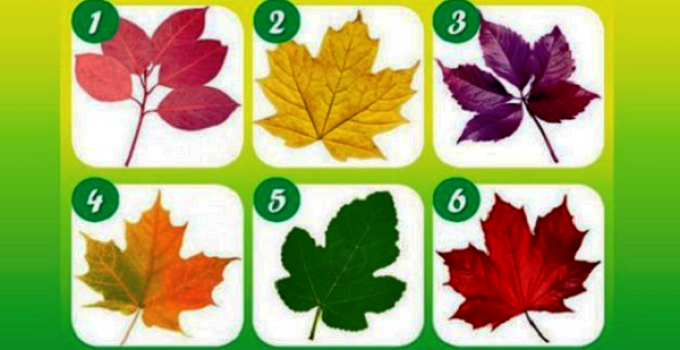PICK-YOUR-FAVORITE-LEAF-TO-REVEAL-WHAT-KIND-OF-PERSON-YOU-TRULY-ARE.png