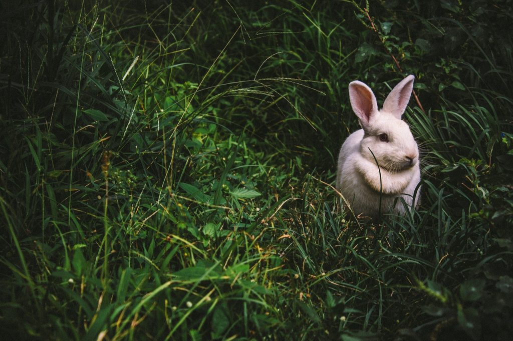 spirit animal, rabbit